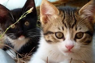 В гостях у домашних животных